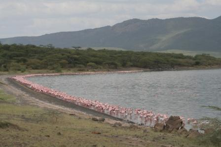 Squillions of flamingos